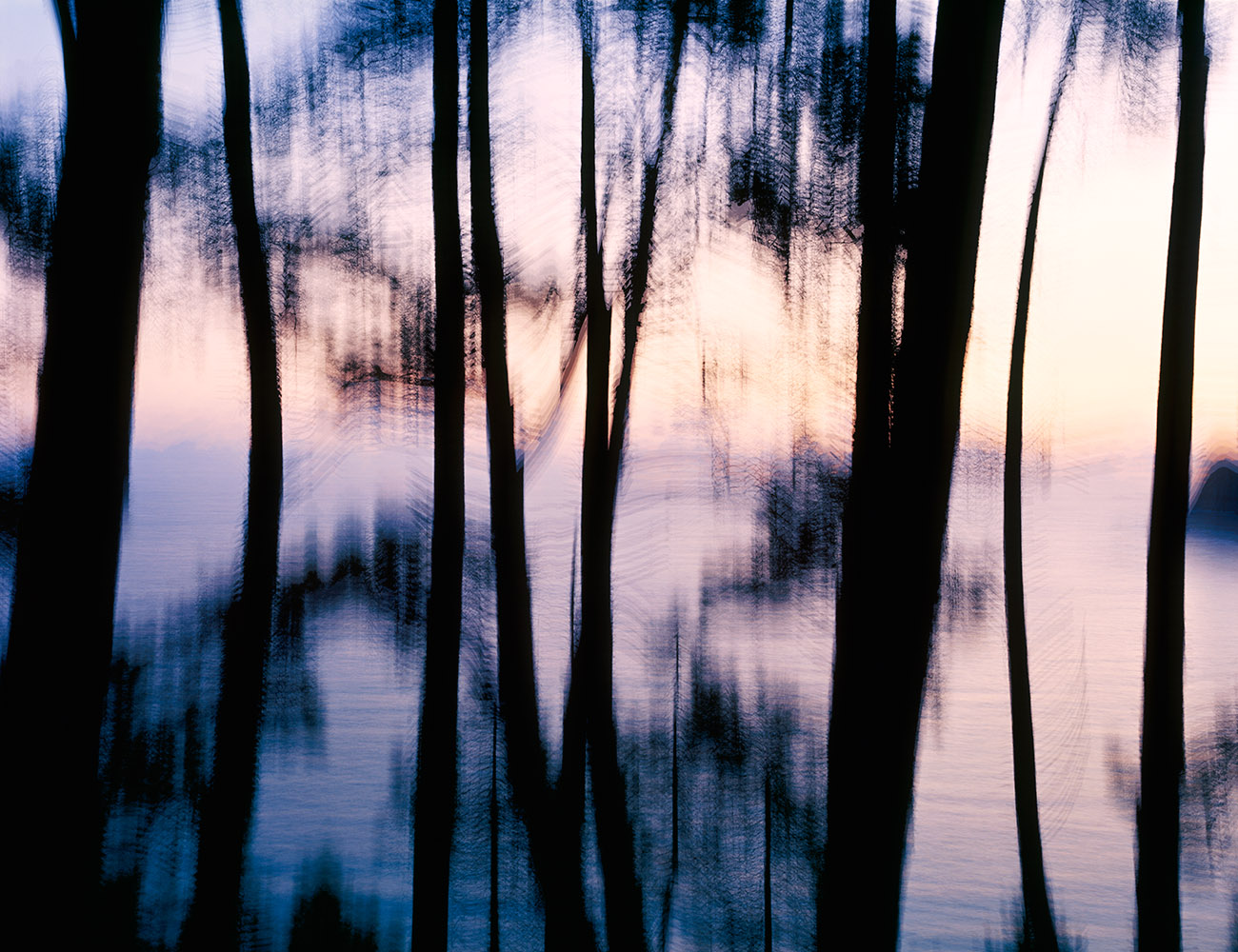 El bosque multiplicado - FERNANDO PUCHE,  NATURE  PHOTOGRAPHY  BEYOND  OBVIOUS