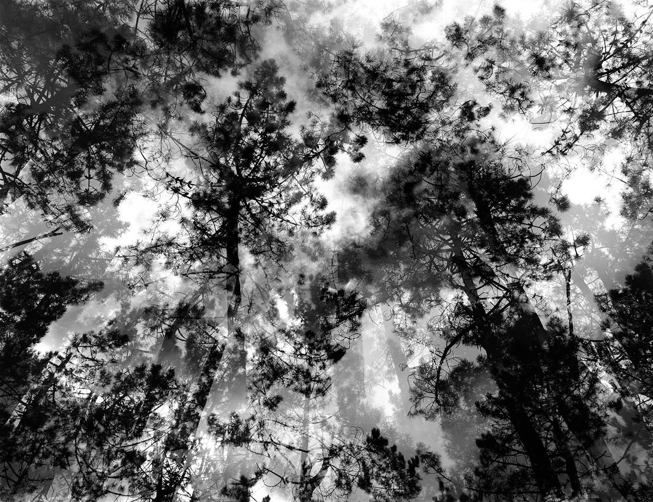 Caleidoscopio en escala de grises - FERNANDO PUCHE,  NATURE  PHOTOGRAPHY  BEYOND  OBVIOUS