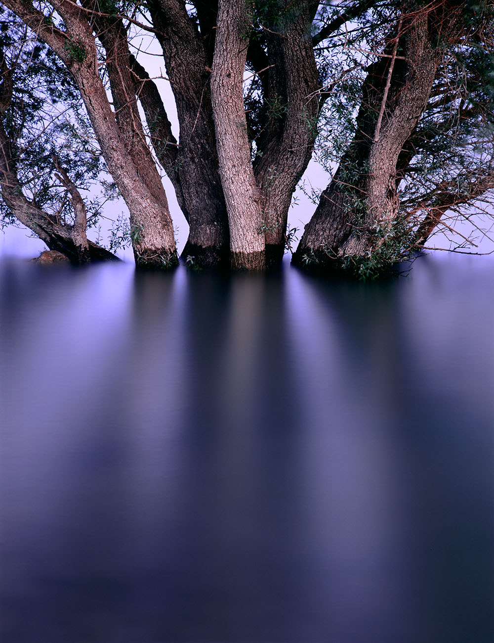 ARCHIVO - FERNANDO PUCHE,  NATURE  PHOTOGRAPHY  BEYOND  OBVIOUS