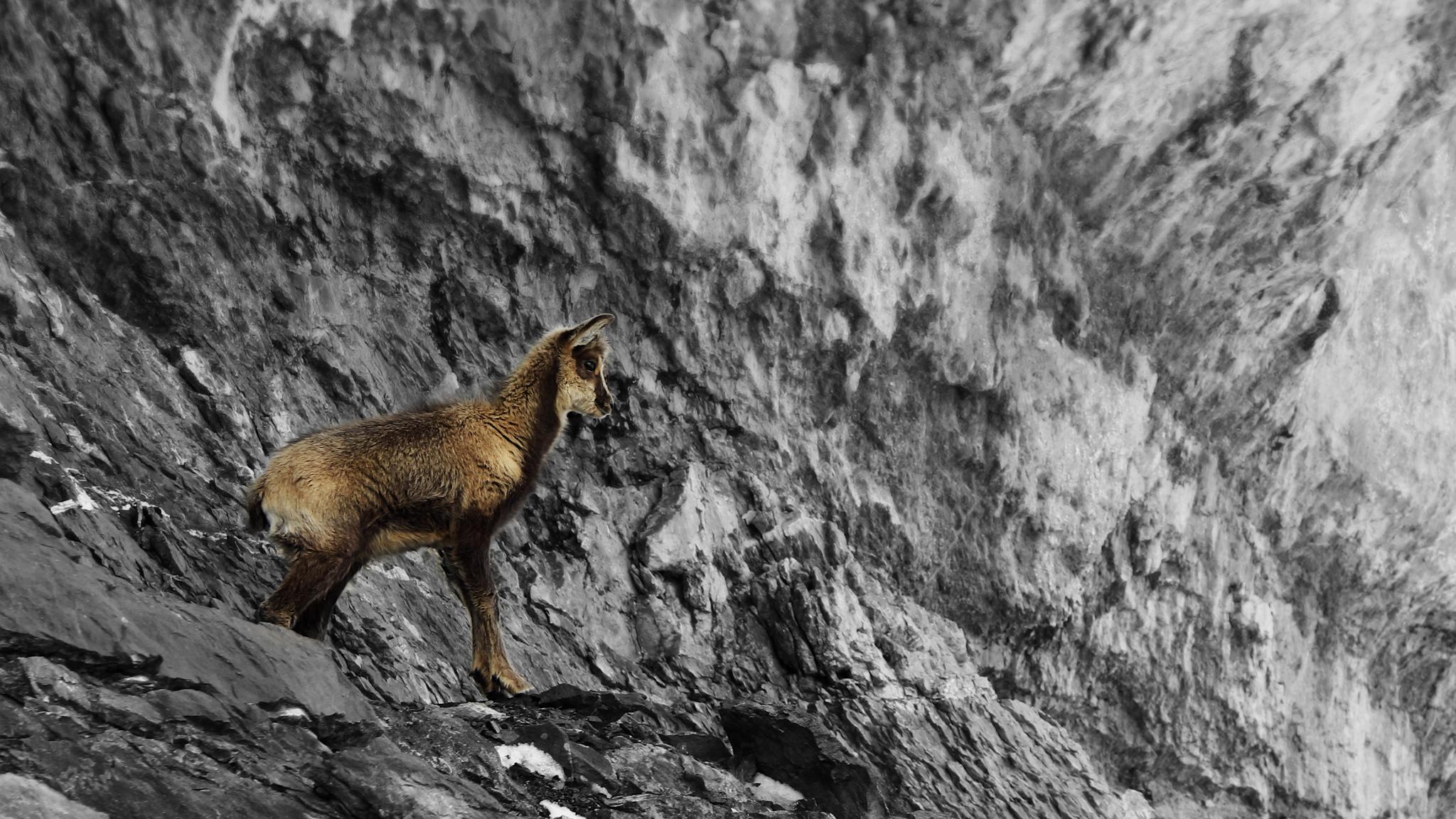 Cría de Sarrio - Paisajes del valle - Fotos del Valle del Aragón, Mikel Besga