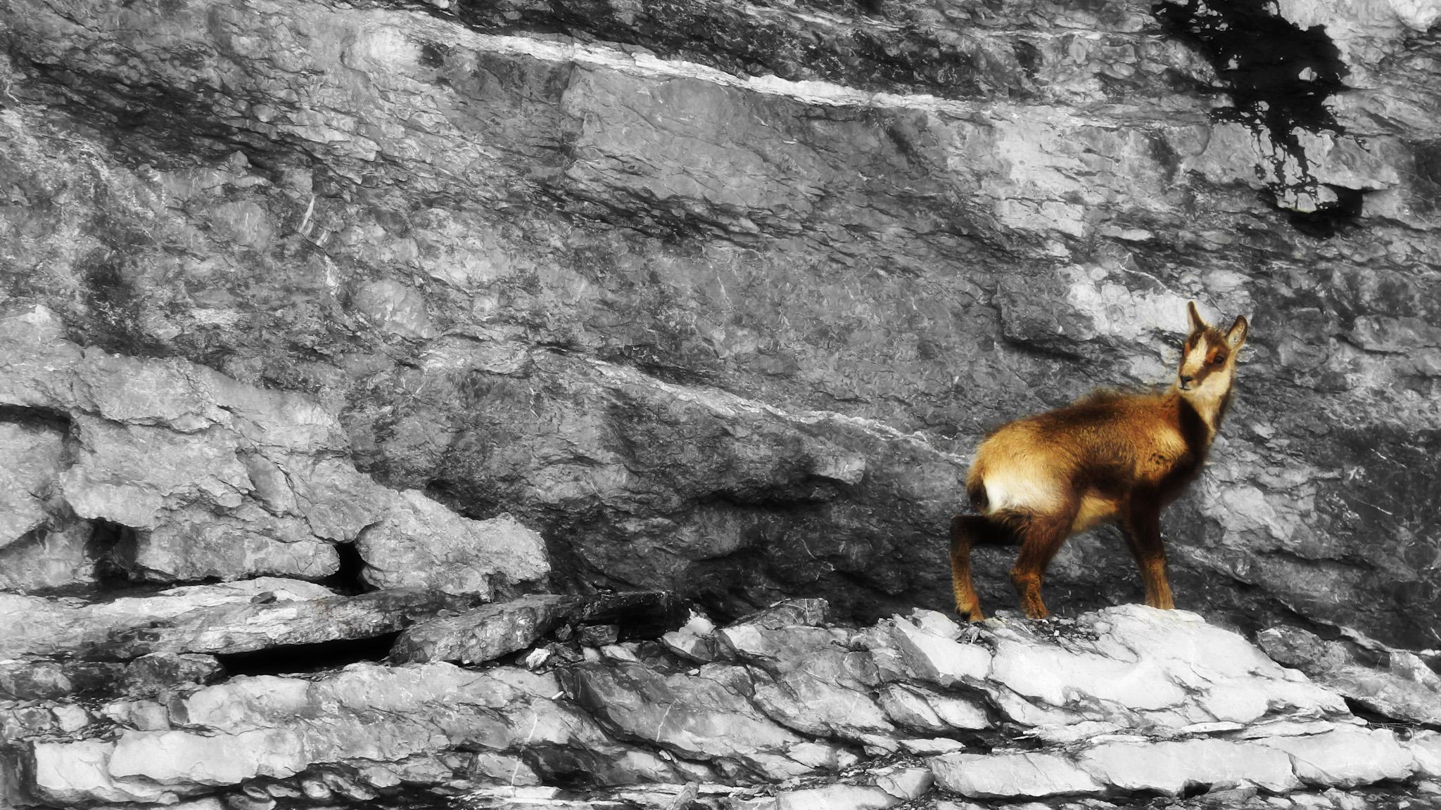 Cría de Sarrio 2 - Paisajes del valle - Fotos del Valle del Aragón, Mikel Besga