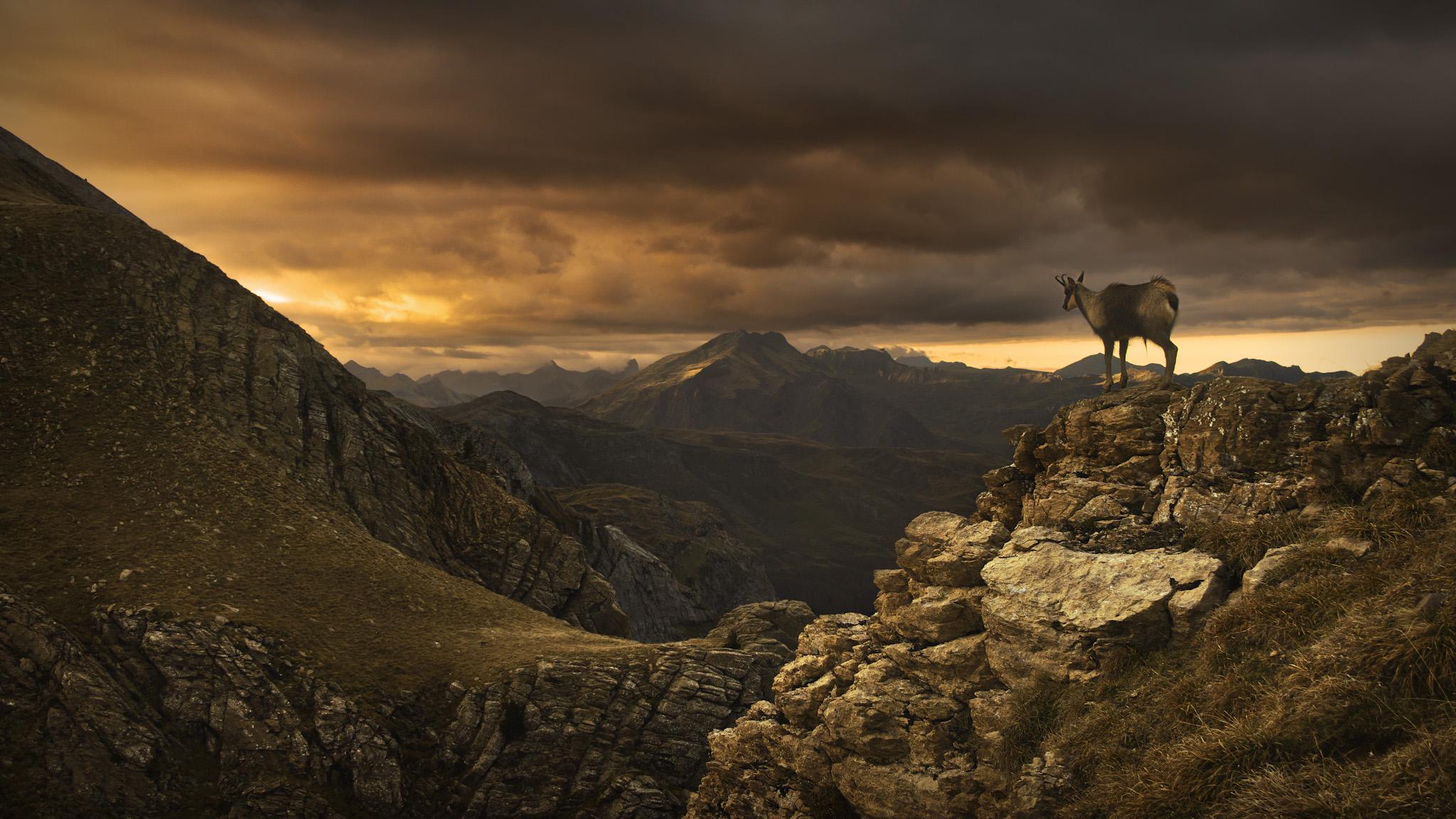 Sarrio en Tortiellas - Paisajes del valle - Fotos del Valle del Aragón, Mikel Besga