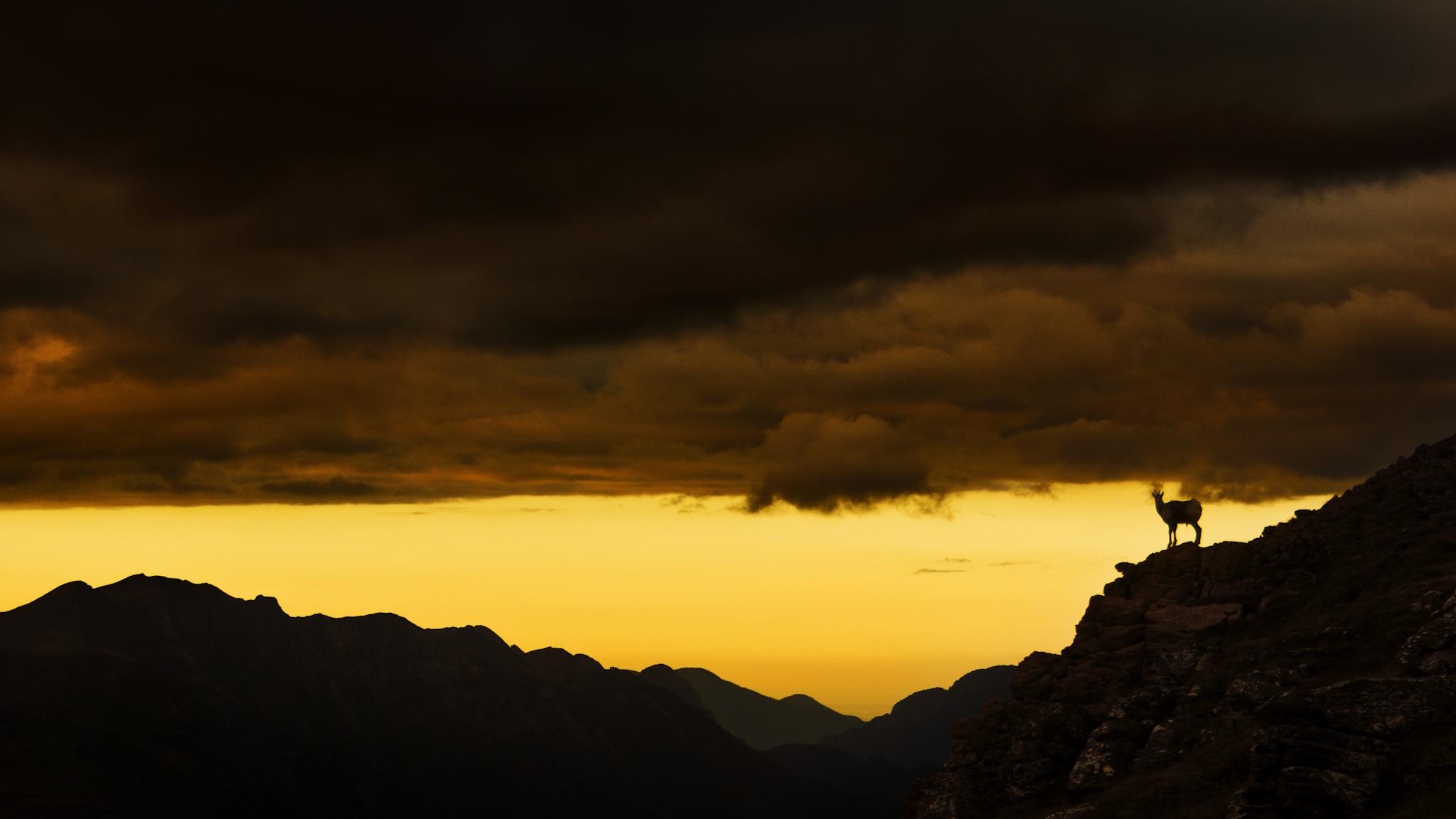 Sarrio en Tortiellas 2 - Paisajes del valle - Fotos del Valle del Aragón, Mikel Besga