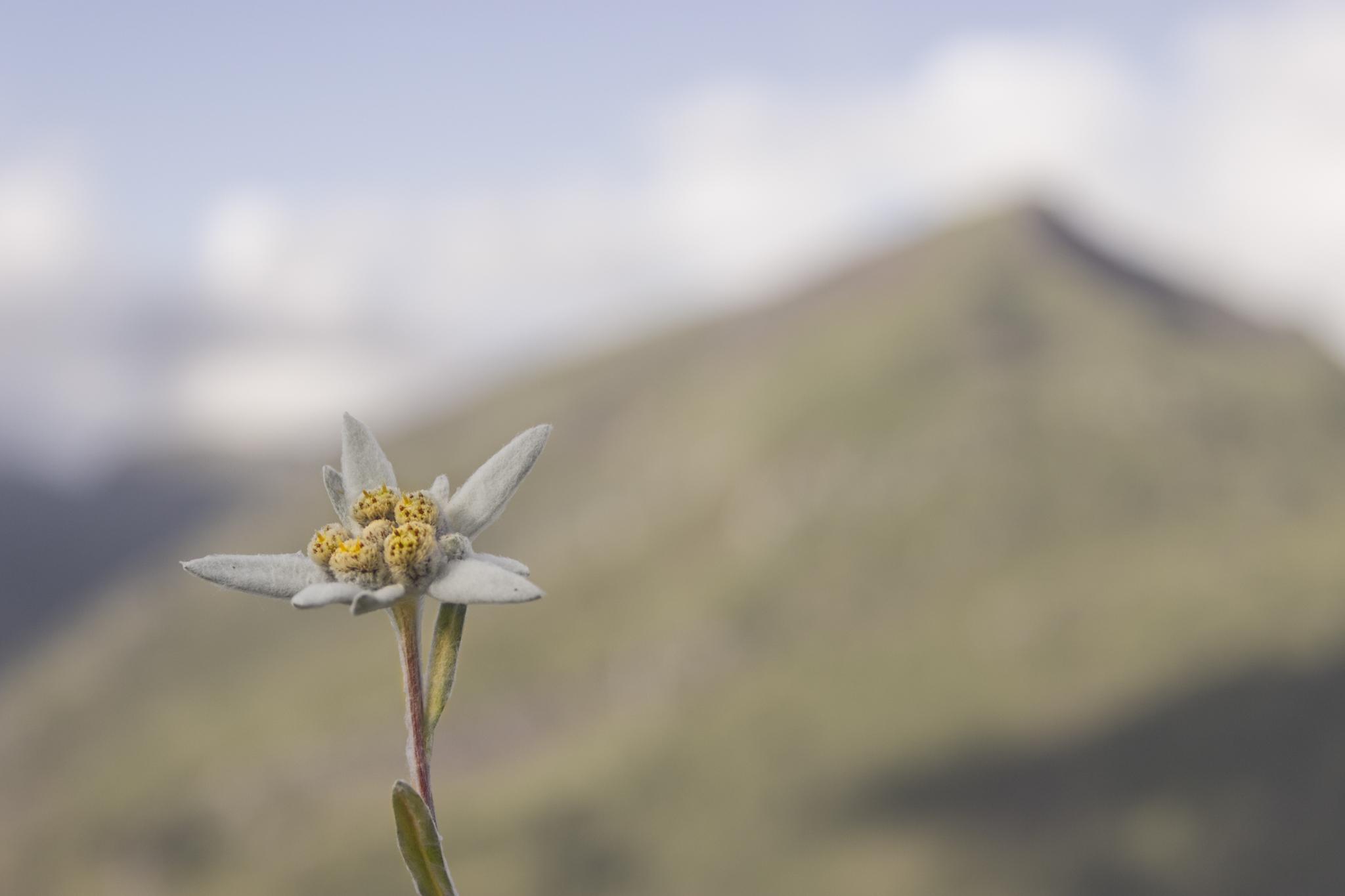 Edelweis y La Raca - Paisajes del valle - Fotos del Valle del Aragón, Mikel Besga