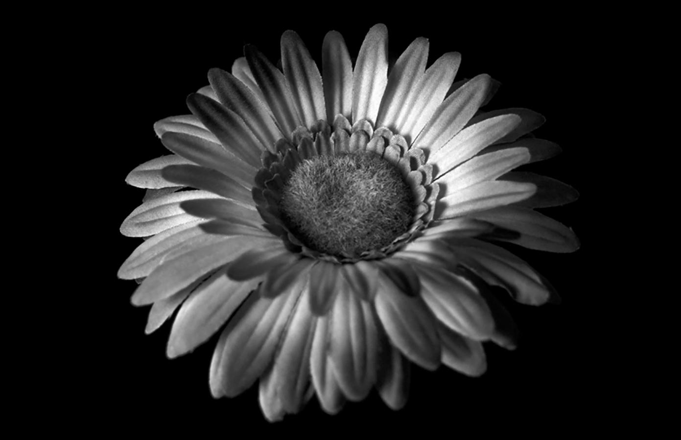 Flor en blanco y negro   2009   A Coruña, España - Flower in black and white   2009   A Coruña, Spain - Miguel Naya   Photography