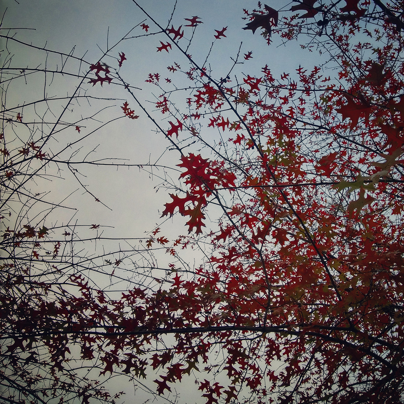 Árbol en otoño   2015   Oporto, Portugal - Tree in Autumm   2015   Porto, Portugal - Miguel Naya   Photography