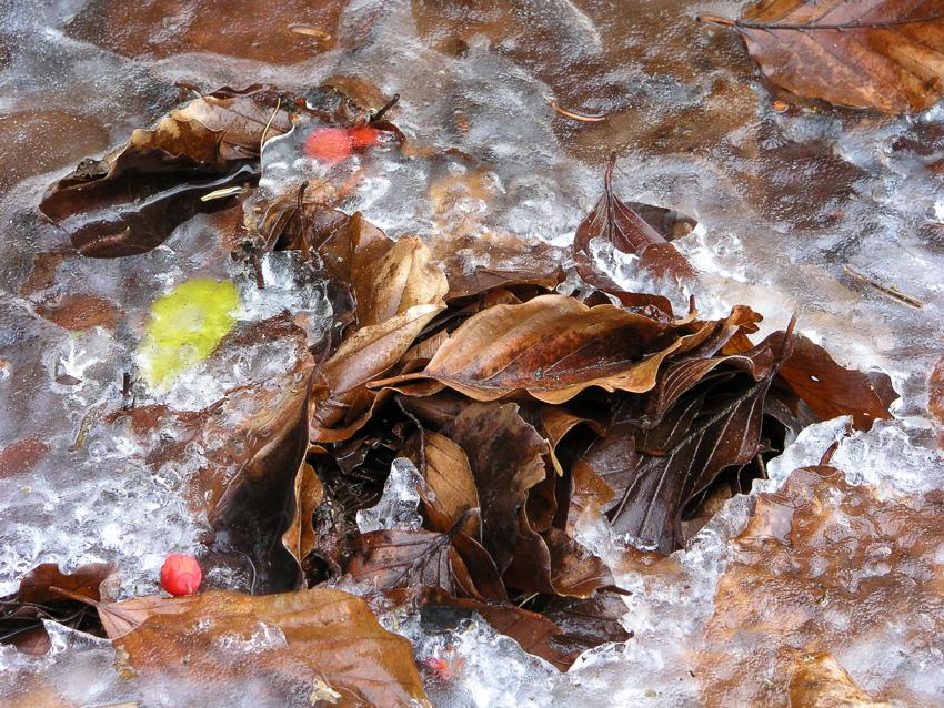 Hojas de Otoños heladas, PN de Ordesa, España - Inicio - Juan Abal - Yolanda Moreno - Fotografía de Naturaleza y de viajes