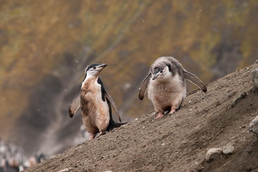 Antártida - Yolanda Moreno & Juan Abal , Fotografía de naturaleza y de viajes