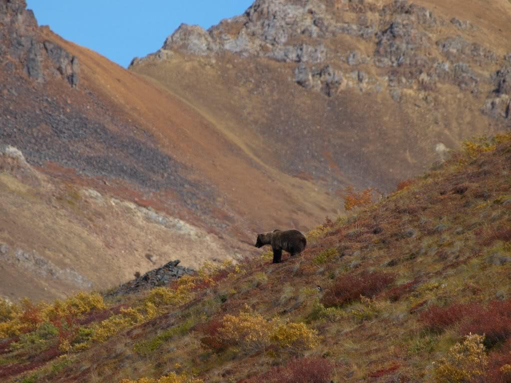 Denali - Yolanda Moreno & Juan Abal , Fotografía de naturaleza y de viajes
