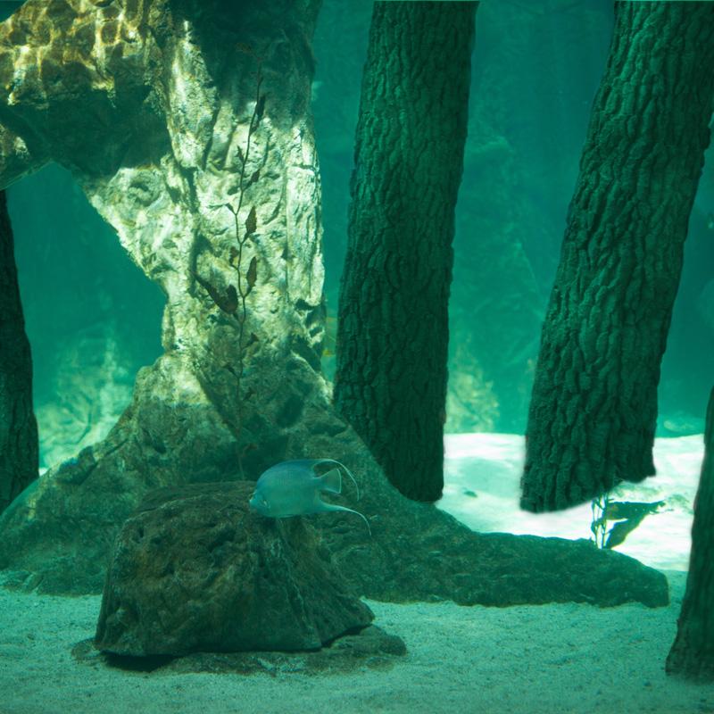 Les lacs de Titan - NSH art