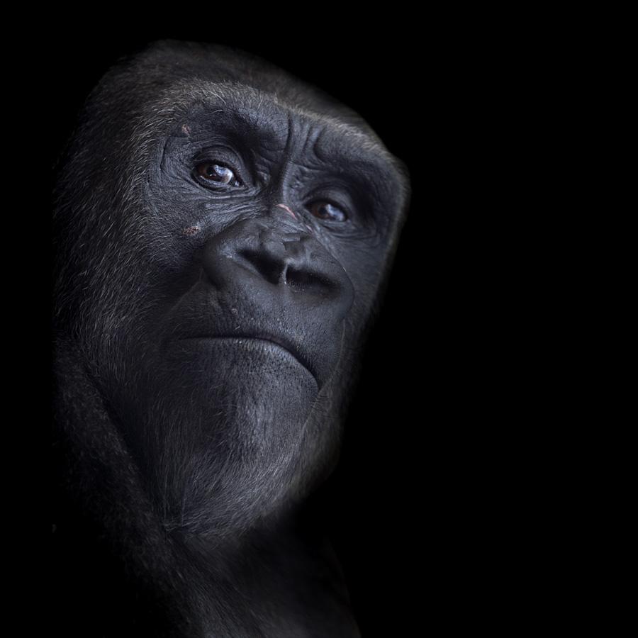 Homo Damnatus - NSH art