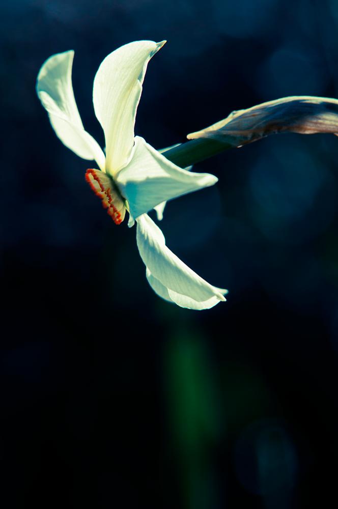 borealis - tiny sensation - Tiny sensation: flower macro photography by Nuria Blanco