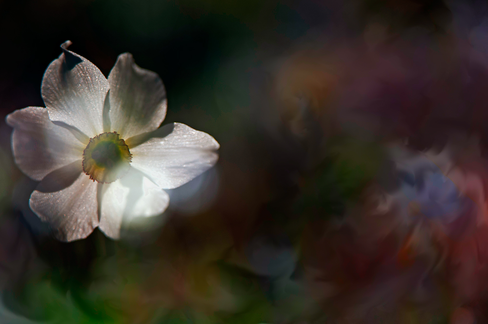 dreamed - personal insight - Nuria Blanco. Heredad Segura Viudas fine art photography . Wild nature in  Spain.Vines