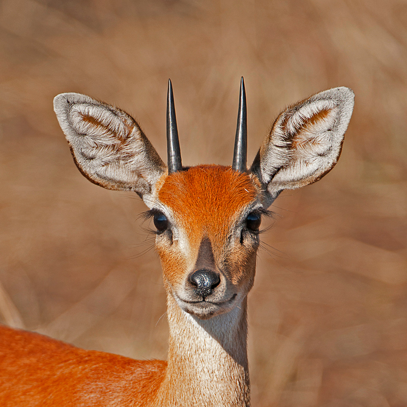 portraits - Animal portraits by Nuria B. Arenas. Wildlife photography of Africa