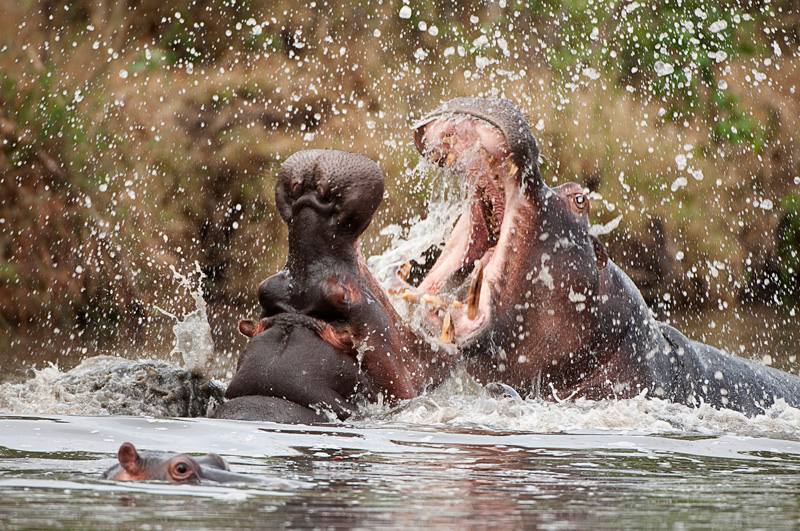 behavior - Animal behavior photography by Nuria B. Arenas. Images of Africa