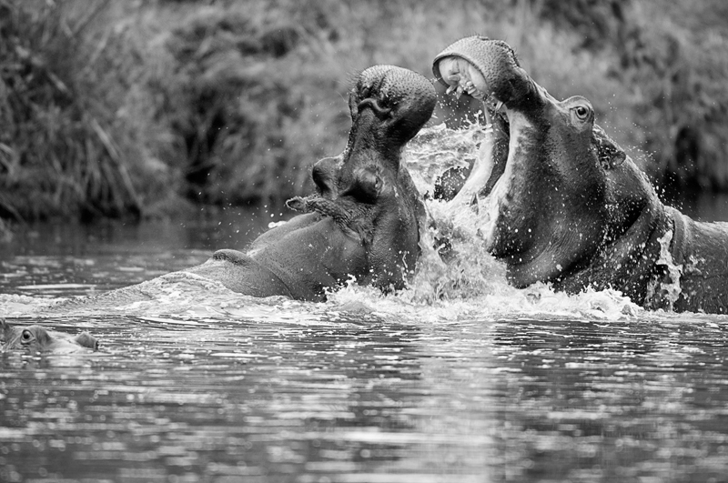 no words...  - black and white - Nuria Blanco, Nature&Wildlife Photographer