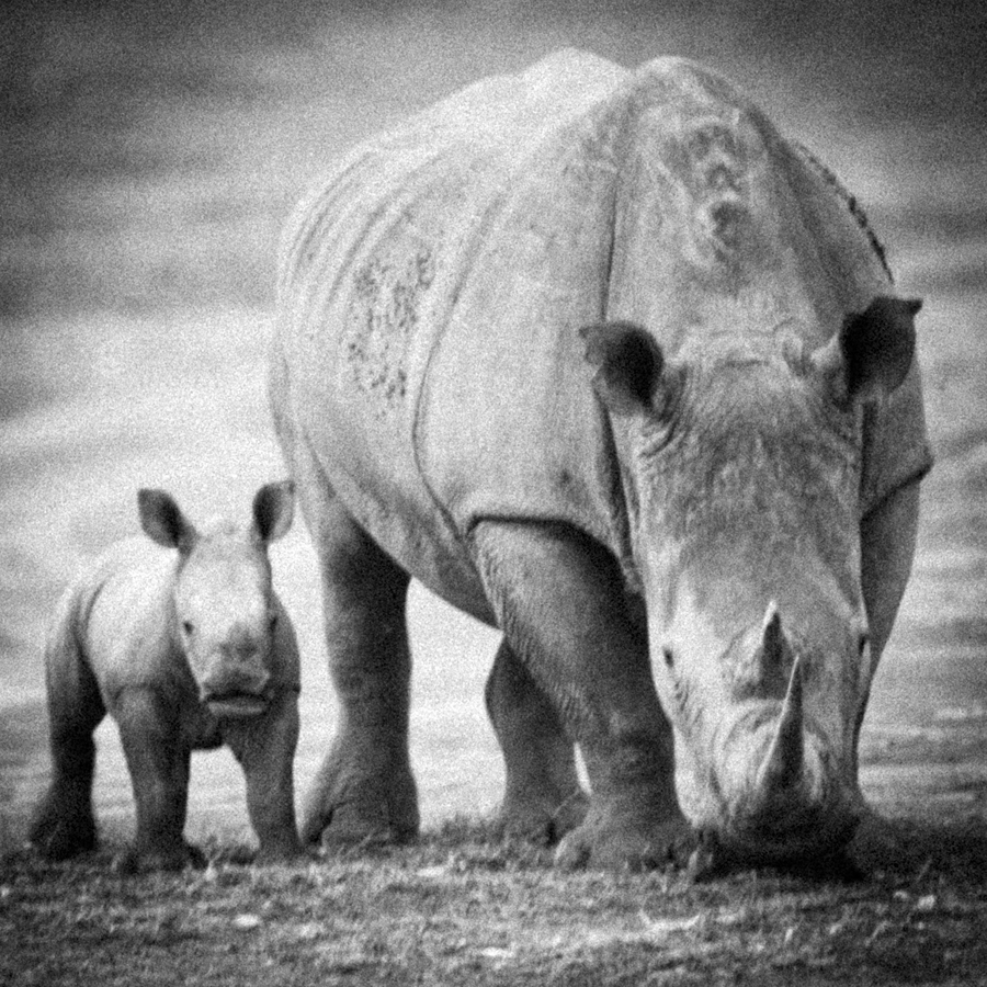 out of the time II                      - black and white - Nuria Blanco, Nature&Wildlife Photographer