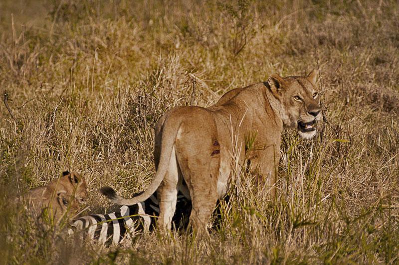 damaged - behavior - Animal behavior photography by Nuria B. Arenas. Images of Africa