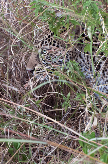 hidden - behavior - Animal behavior photography by Nuria B. Arenas. Images of Africa