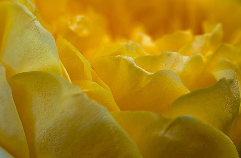 natural carpet - tiny sensation - Tiny sensation: flower macro photography by Nuria Blanco
