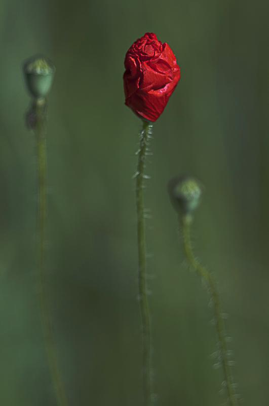 only you - tiny sensation - Tiny sensation: flower macro photography by Nuria Blanco