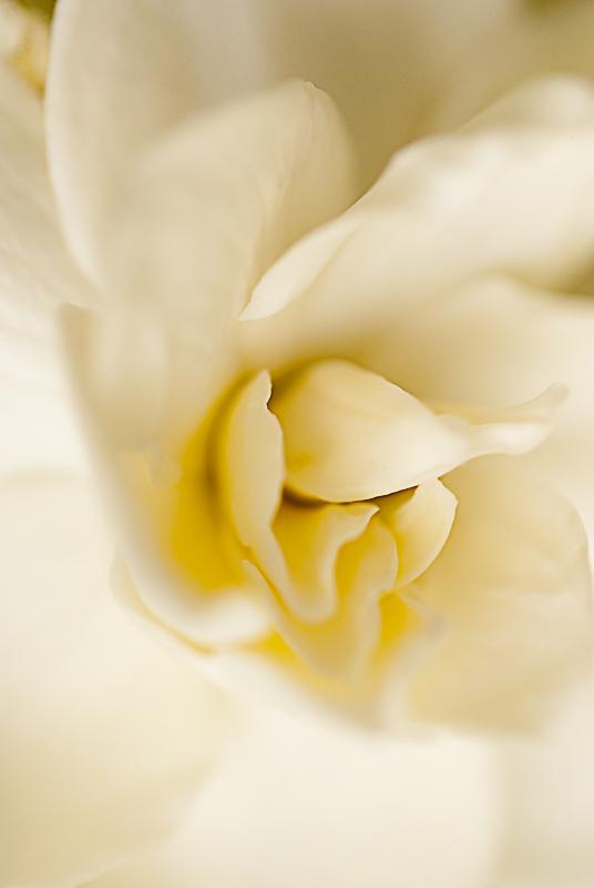 soft l - tiny sensation - Tiny sensation: flower macro photography by Nuria Blanco