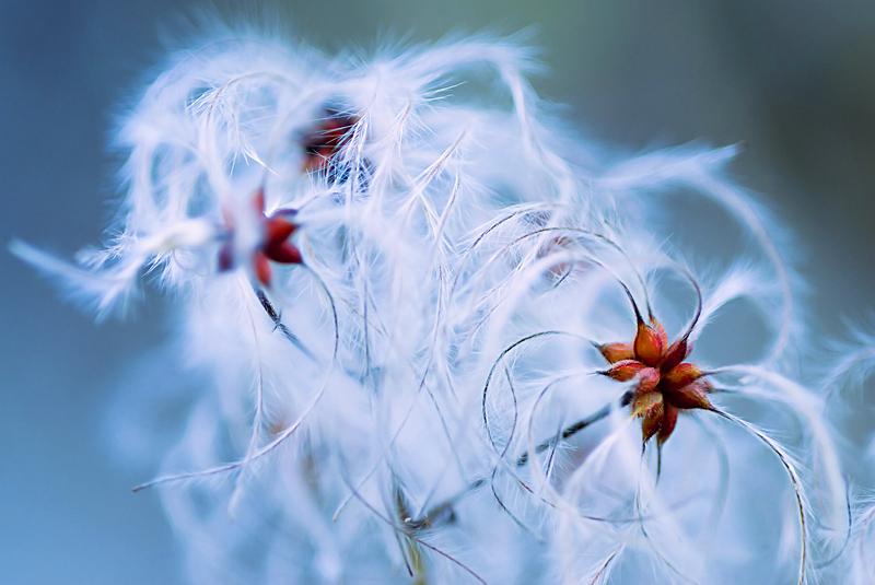 feathers in the wind - personal insight - Nuria Blanco. Heredad Segura Viudas fine art photography . Wild nature in  Spain.Vines
