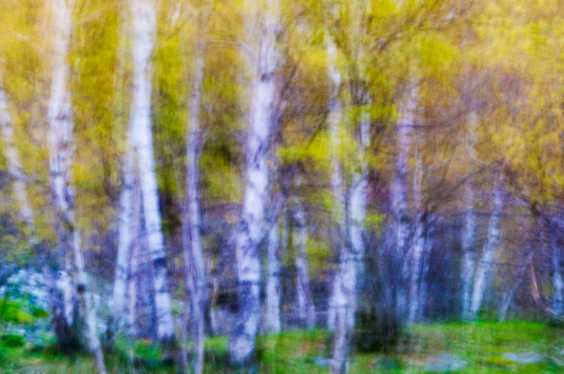 painting the forest - forest and dreams - Forest and dreams. Photos that look like paintings by Nuria B. Arenas