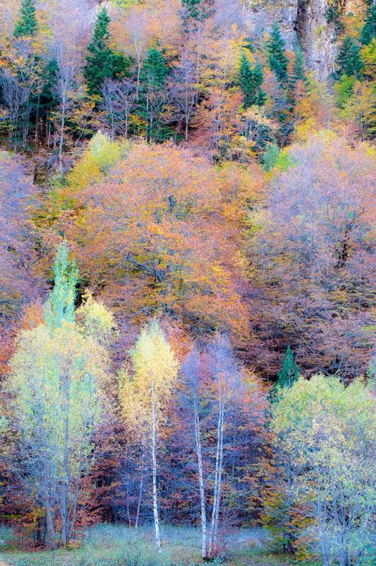 watercolor - forest and dreams - Bosques. Fotografía de autor realizada por Nuria Blanco Arenas.