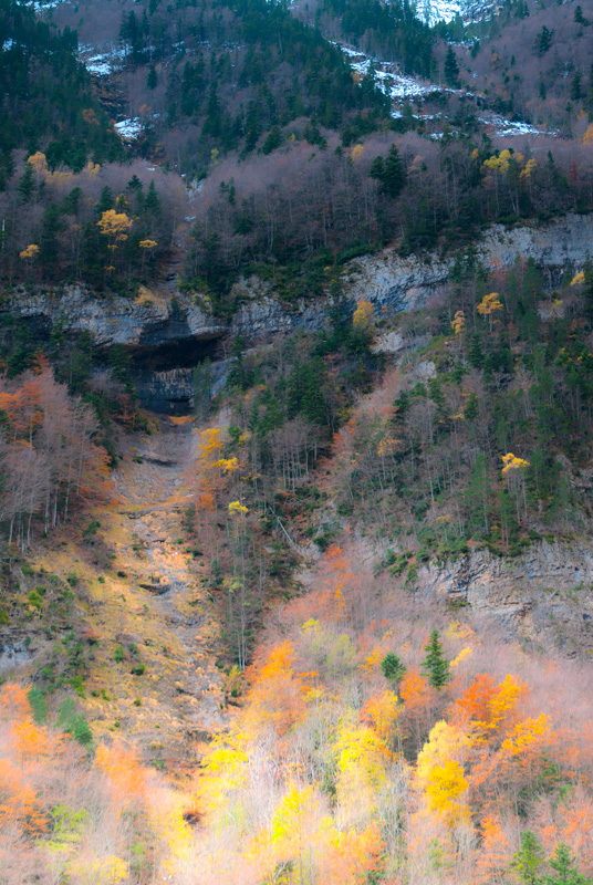 autumn colors - forest and dreams - Forest and dreams. Photos that look like paintings by Nuria B. Arenas
