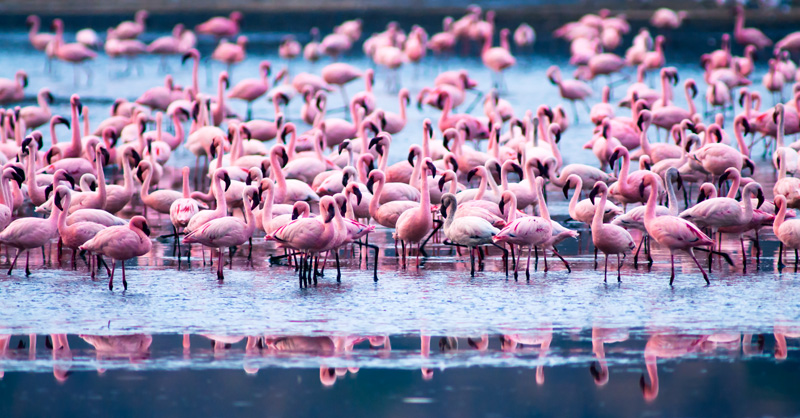 pink jacuzzi - behavior - Animal behavior photography by Nuria B. Arenas. Images of Africa