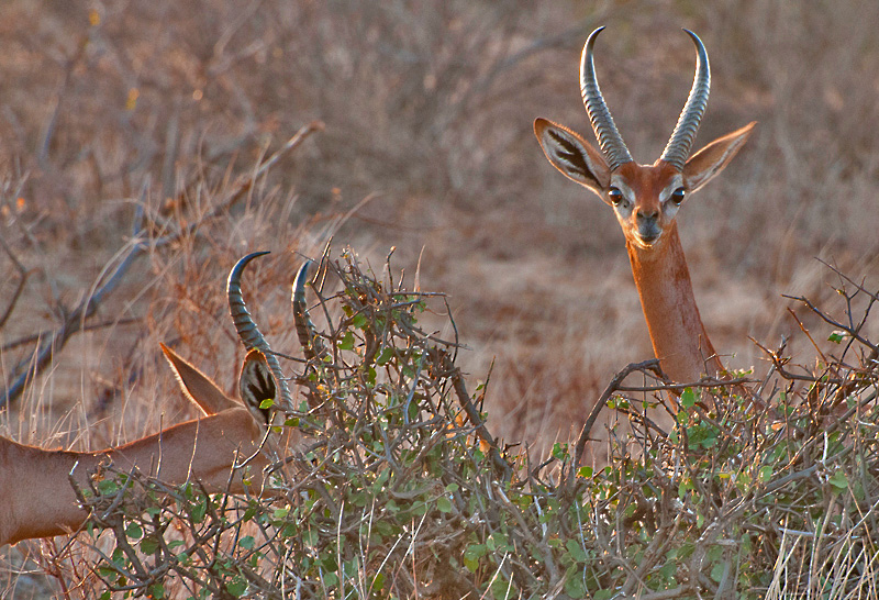 bold - portraits - Animal portraits by Nuria B. Arenas. Wildlife photography of Africa