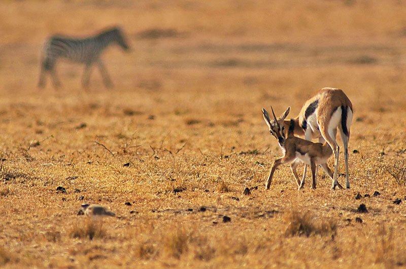 mum - behavior - Animal behavior photography by Nuria B. Arenas. Images of Africa
