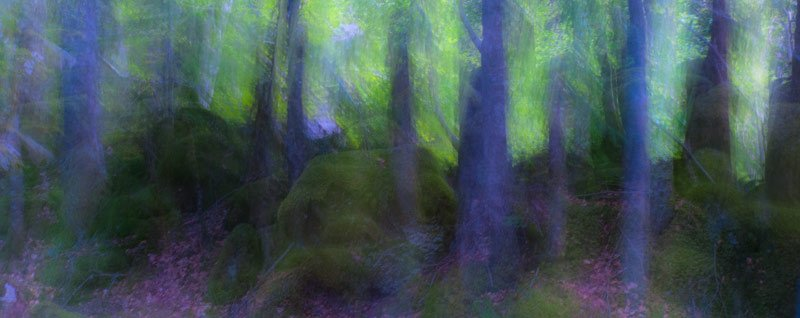 hidden - forest and dreams - Forest and dreams. Photos that look like paintings by Nuria B. Arenas