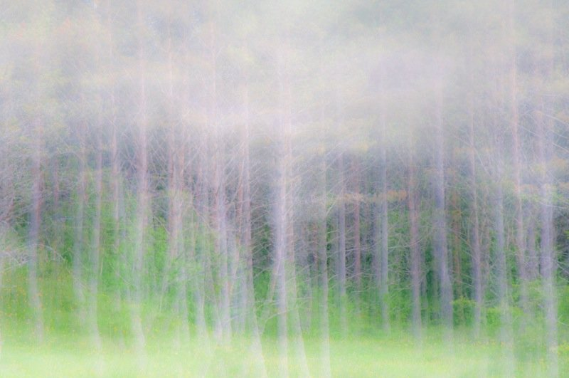 between realities - forest and dreams - Forest and dreams. Photos that look like paintings by Nuria B. Arenas