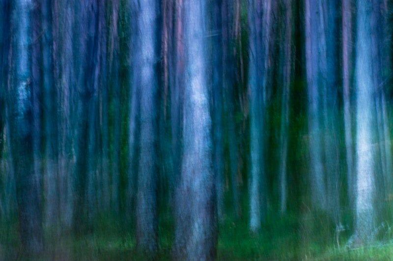 blue hour - forest and dreams - Bosques. Fotografía de autor realizada por Nuria Blanco Arenas.