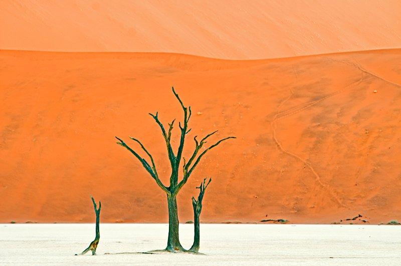 one Namib to Dali - golddust - Gold dust. Namibia´s Namib desert photography by Nuria B. Arenas