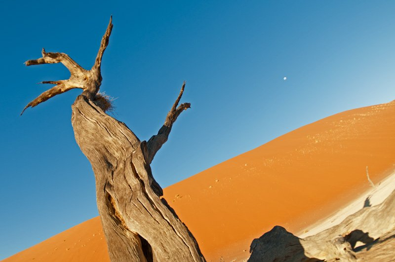 The Living Forest - golddust - Gold dust. Namibia´s Namib desert photography by Nuria B. Arenas