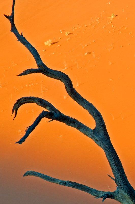 magic finger - golddust - Gold dust. Namibia´s Namib desert photography by Nuria B. Arenas