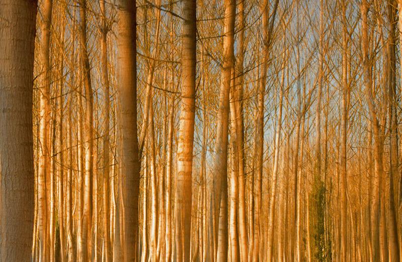 Juan... Forever - forest and dreams - Bosques. Fotografía de autor realizada por Nuria Blanco Arenas.