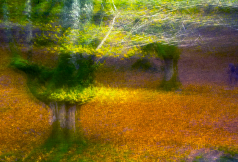 loving Euskadi - forest and dreams - Forest and dreams. Photos that look like paintings by Nuria B. Arenas