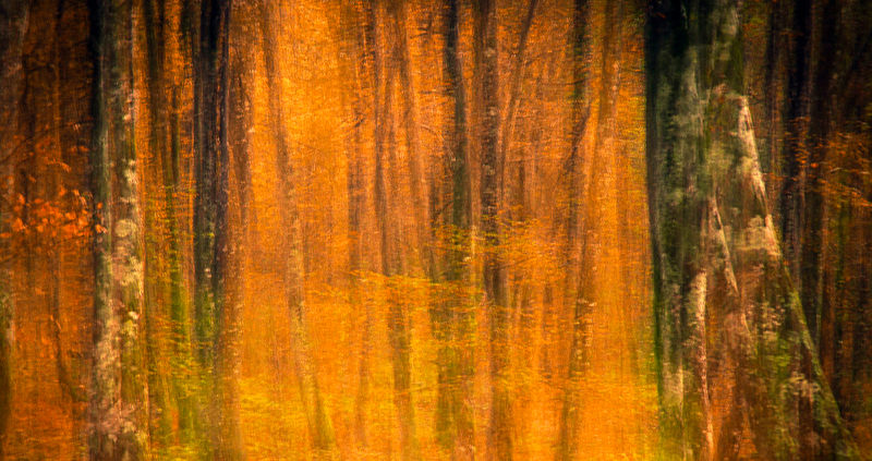 St Valentine Forest - forest and dreams - Forest and dreams. Photos that look like paintings by Nuria B. Arenas