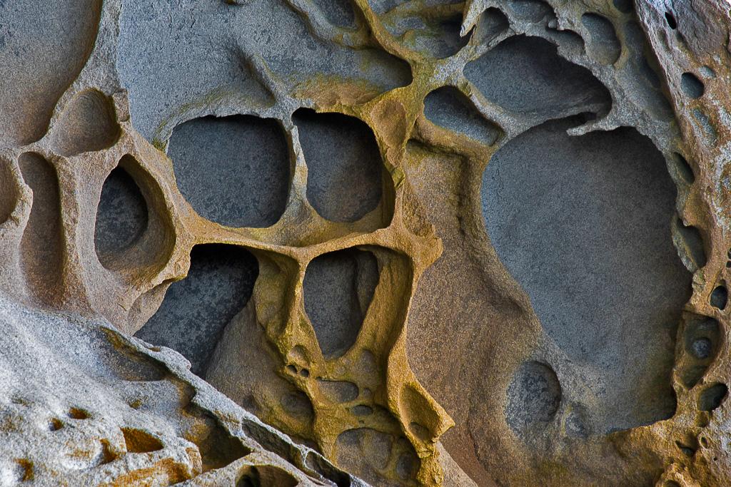 sense & sensibility - Nuria Blanco, Nature&Wildlife Photographer