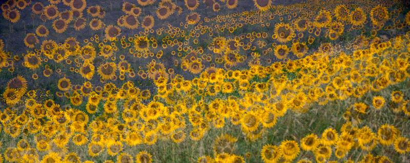 Provence & Lavande ... Promenades - Nuria Blanco , Nature&Wildlife Photographer