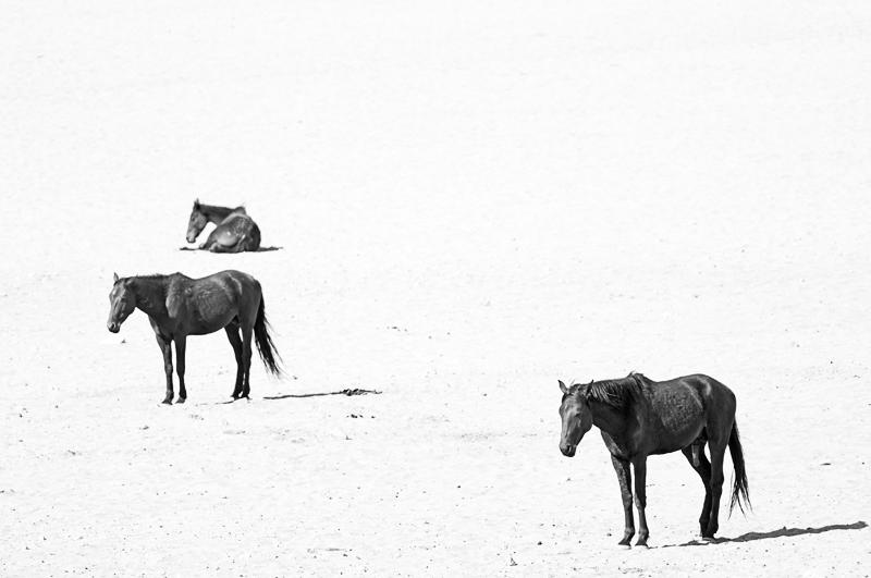 wild horses - black and white - Nuria Blanco, Nature&Wildlife Photographer