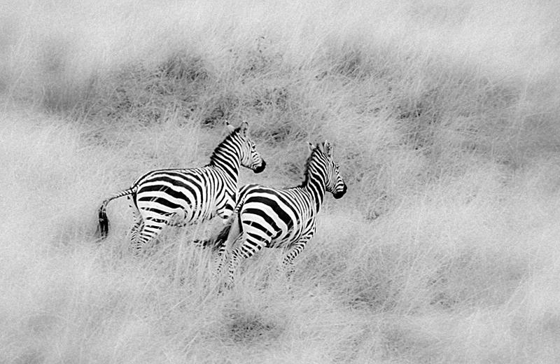 free                                                    - black and white - Nuria Blanco, Nature&Wildlife Photographer