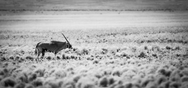 desolate - black and white - Nuria Blanco, Nature&Wildlife Photographer