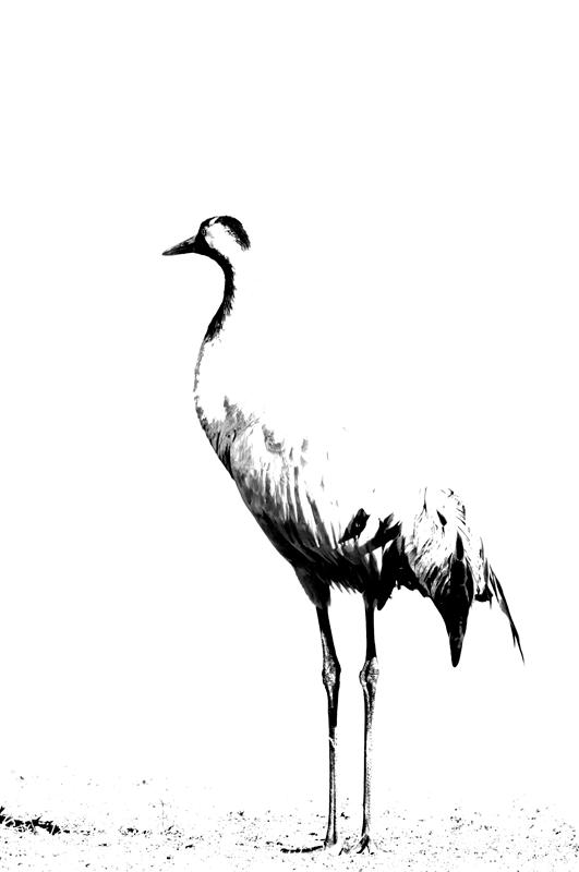 silhouette - black and white - Nuria Blanco, Nature&Wildlife Photographer