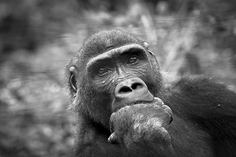 what humans want...? - black and white - Nuria Blanco, Nature&Wildlife Photographer