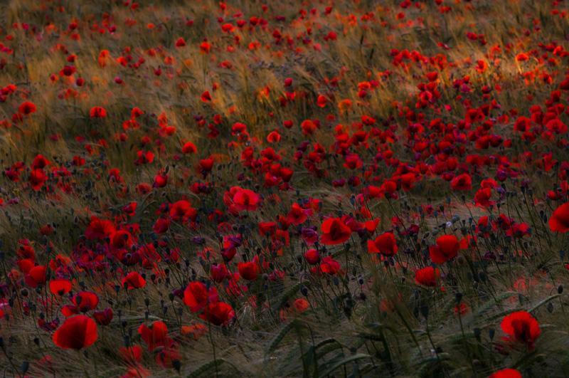 color land - personal insight - Nuria Blanco. Heredad Segura Viudas fine art photography . Wild nature in  Spain.Vines